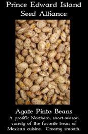 agate-pinto-bean