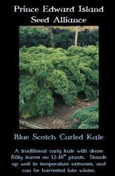 blue-scotch-curled-kale