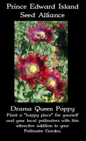 drama queen poppy