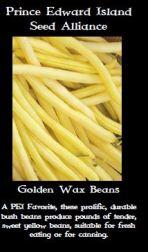 golden-wax-bean