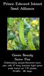 green-beauty-snow-pea