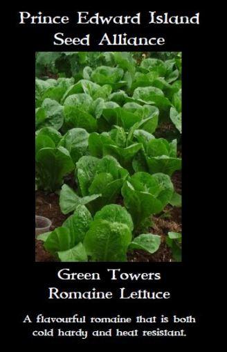 green-towers-romaine