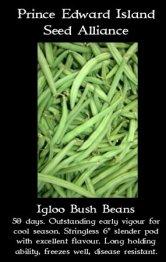 igloo bush beans