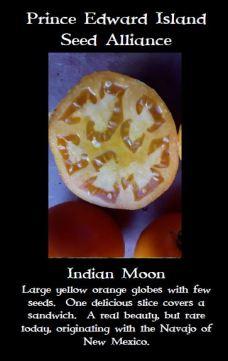 indian-moon