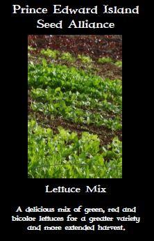 lettuce-mix