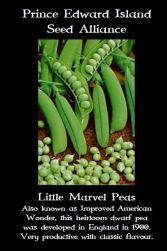 little-marvel-pea