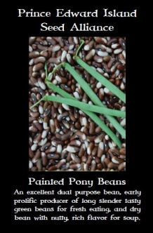 painted-pony-beans