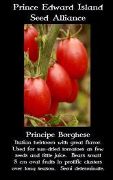 principe-borghese-tomato