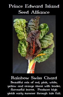 rainbow-swish-chard