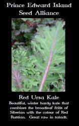 red-ursa-kale