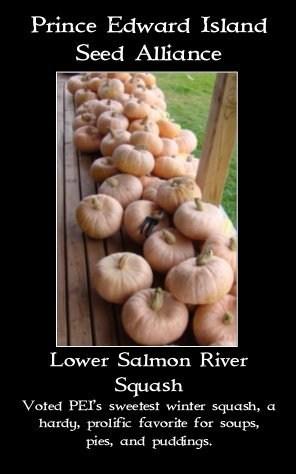 salmon-riversquash