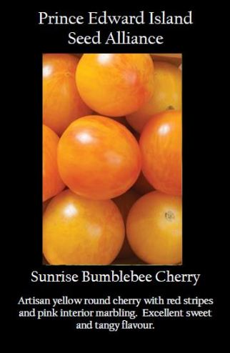 sunrise-bumblebee-cheery