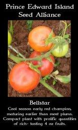 tomato-bellstar