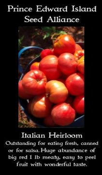 tomato italian heirloom