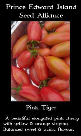 tomato-pink-tiger