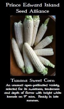 tuxana-sweet-corn