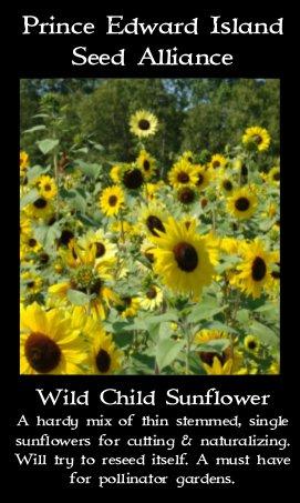 wild-child-sunflower