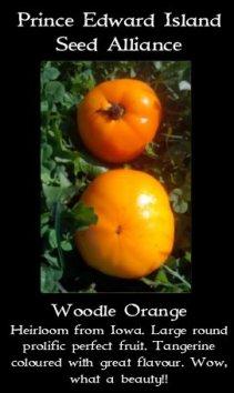 woodle orange