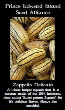 zepplin-delecata